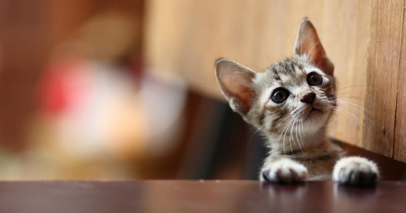 comment changer l alimentation d un chat que l on vient d adopter nourrir son chat wamiz. Black Bedroom Furniture Sets. Home Design Ideas