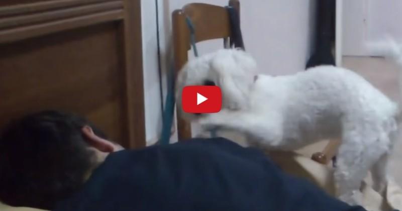 Ces chiens qui réveillent leurs maîtres vont vous mettre du baume au cœur (Vidéo du jour)