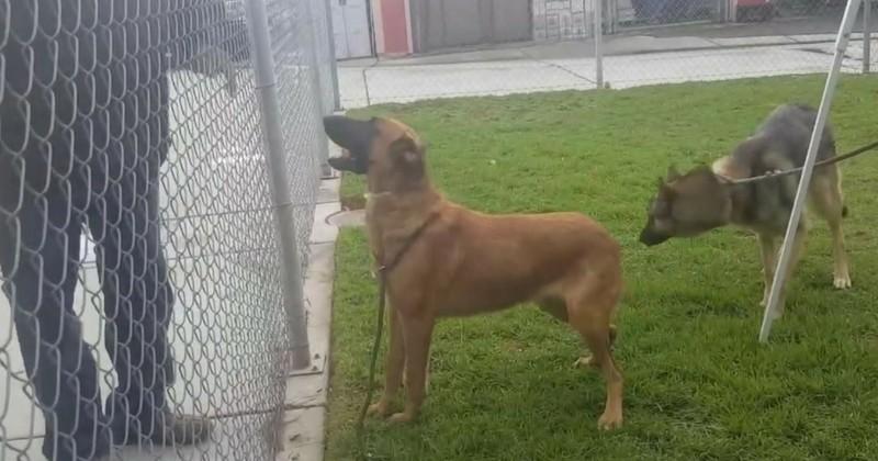 Déchirant: abandonné dans un refuge, un chien regarde ses maîtres en choisir un nouveau