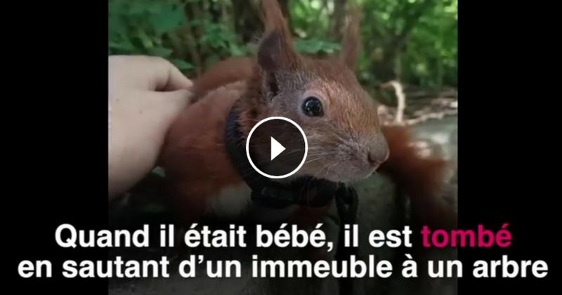 Sauvé par un homme au grand cœur, cet écureuil mène la belle vie (Vidéo du jour)