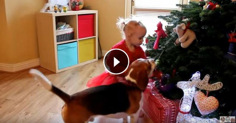 Adorable: un chien décore son sapin de Noël avec sa petite humaine (Vidéo du jour)