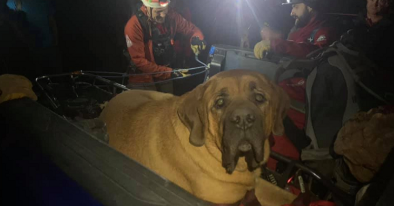 Randonnée avec son chien de 90 kilos : la panique s'empare de lui quand le toutou refuse de marcher...