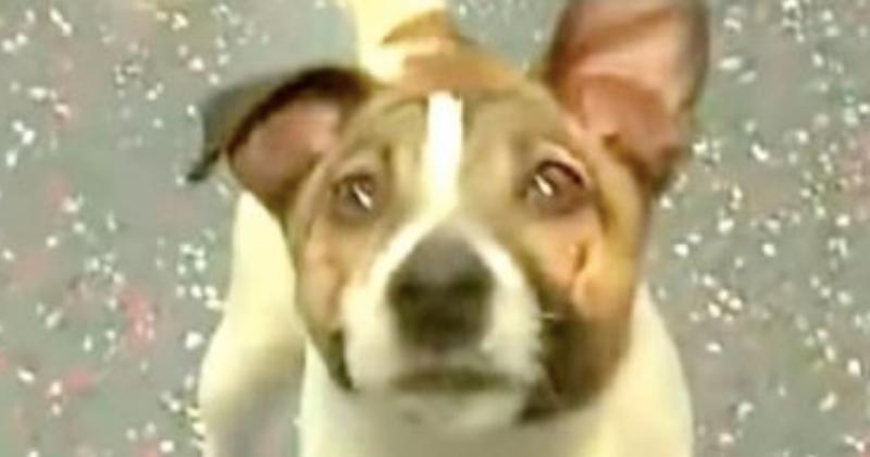 Il trouve un chien laissé pour mort au milieu de la route, en s'approchant il réalise que c'est encore pire