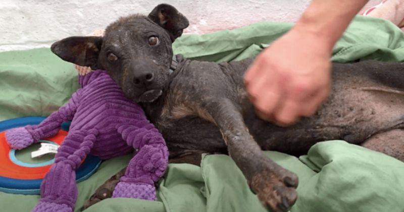 Leur chien tombe malade, au lieu de le soigner ils prennent une horrible décision