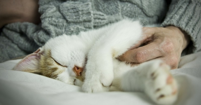 8 signes qui prouvent que votre chat vous aime