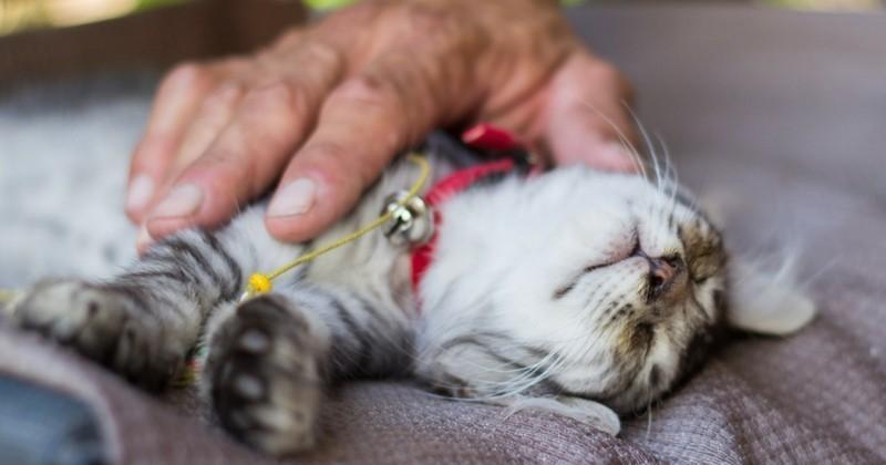 L'ostéopathie pour chats : ça existe et c'est efficace !