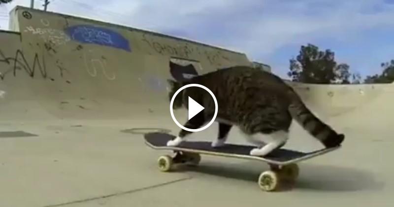 Ce chat est bluffant : il skate comme un dieu ! (Vidéo du jour)