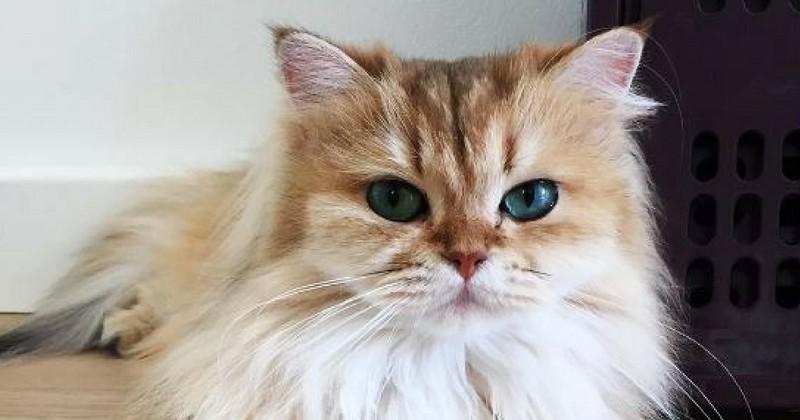 On a tous besoin d'un chat comme Smoothie dans sa vie