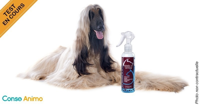 Test produit essayez le spray d m lant de ladybel pour votre chien poils longs conso wamiz - Produit pour empecher les chiens d uriner ...