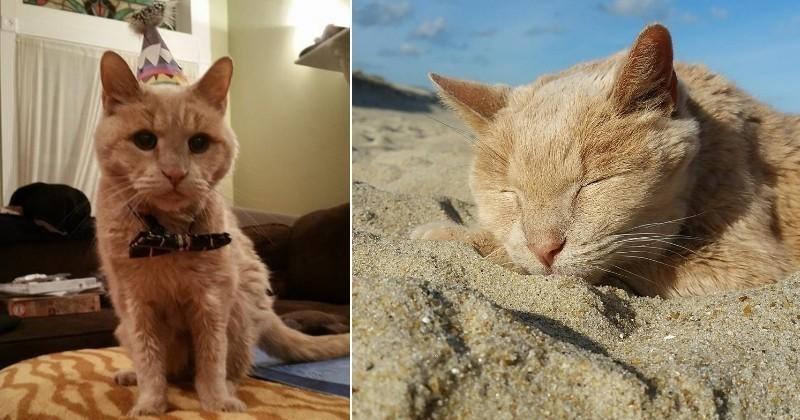 Abandonné à l'âge de 20 ans, un vieux chat reprend goût à la vie grâce à sa nouvelle famille