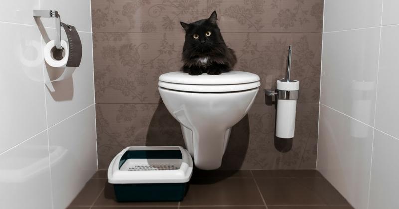 Apprendre à son chat à utiliser les toilettes : bonne ou mauvaise idée ?