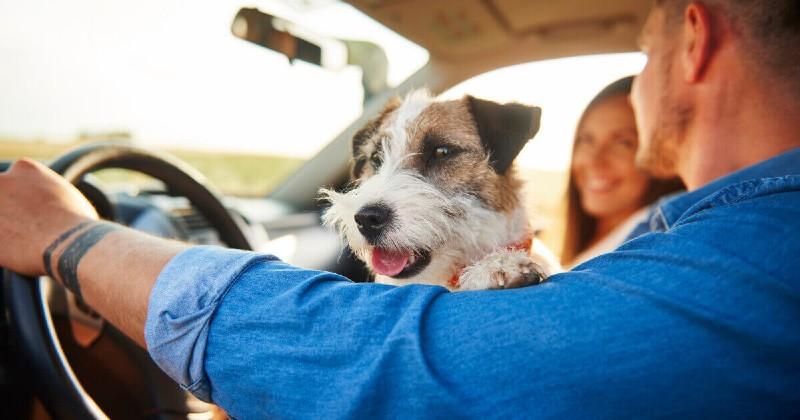 Coronavirus : des touristes sont bloqués avec leur chien en Argentine, l'ambassade est sans pitié