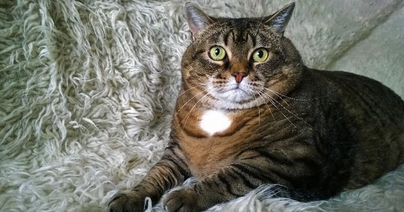Être le maître d'un chat peut faire de vous un adepte du sadomasochisme