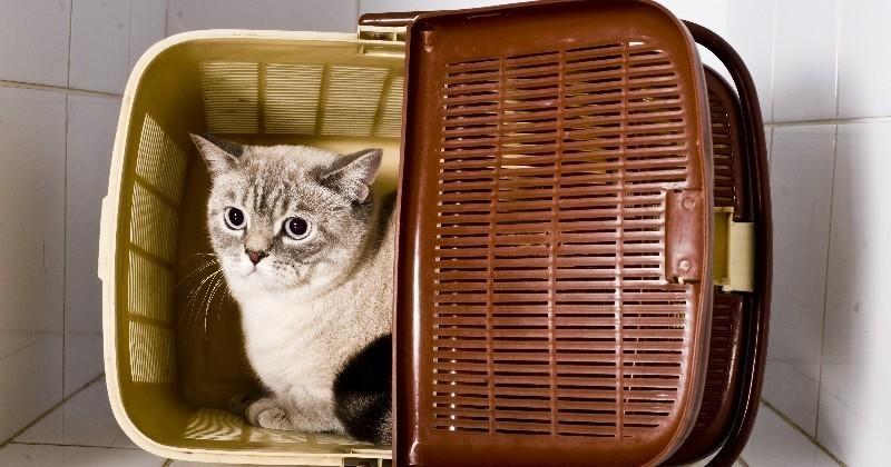 votre chat est stress wamiz vous offre la solution. Black Bedroom Furniture Sets. Home Design Ideas