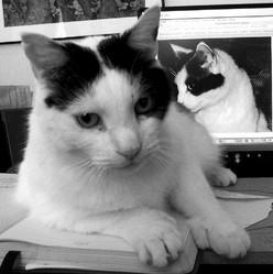 animal internet profil réseaux sociaux