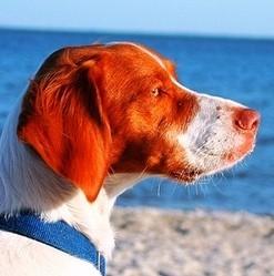 chien accessoires vacances