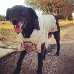 un chien fait un trek de 800 kilomètres