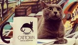 Bar à chats, refuge