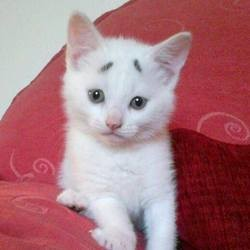 Gary chaton sourcils, concerned kitten