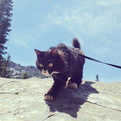 chat randonnée
