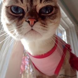 sauerkraut, chat star du web