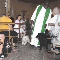 chiens chats rongeurs bénédiction