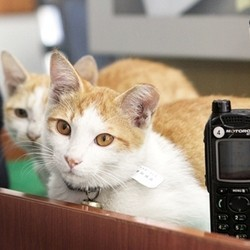 chats police