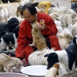 homme chine 140 chiens