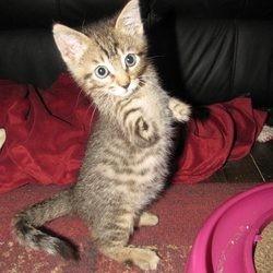 chaton à deux pattes