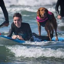 chien surf, chien de thérapie