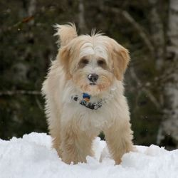Nyima, un chien procureur aux Etats-Unis ?