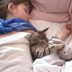 un chat veille sur une petite fille autiste