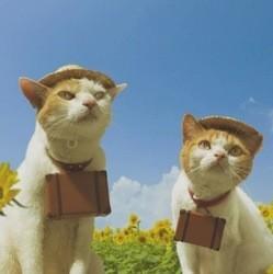 chats gudies japon