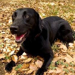 amputent patte chien blessé vétérinaire
