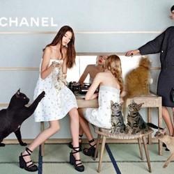 les chats s'invitent sur les photos des campagnes mode