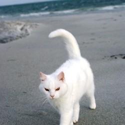 Français qui partent sans leur chat pour les vacances cette année
