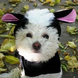 chien deguise deguisement