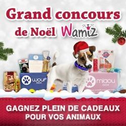 concours de Noël Wamiz