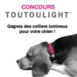collier lumineux pour chien toutoulight