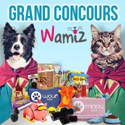 concours anniversaire Wamiz