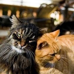 un homme lègue sa maison et sa fortune à ses 2 chats