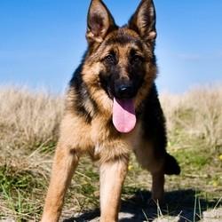 Un tueur de chien dans l'idaho aux Etats-Unis ?
