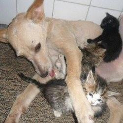 un chien sauve une portée de chatons abandonnés