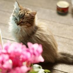 10 plantes toxiques pour les chats et les chiens soigner son chat wamiz - Plantes non toxiques pour les chats ...