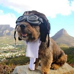 un chien échappe à la mort et fait le tour du monde