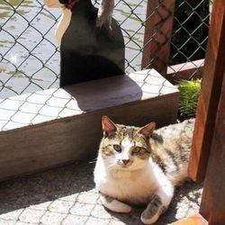 refuge pour chats
