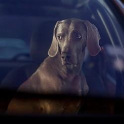La peur de l'abandon illsutrée par des chiens