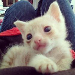 un chaton miraculé né dans un cactus