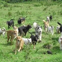 des chiens abandonnés sauvés par une association