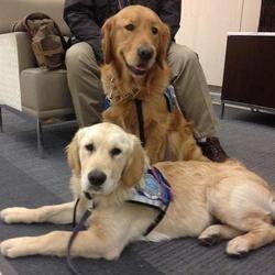 Des chiens de thérapie soutiennent les victimes des attentas de Boston